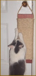 "DH24 - 24"" Door Hanging Scratcher - Product Image"