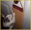 Keep cats from scratching door frames
