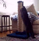 "LSS Straight, heavy duty reinforced 30"" sisal scratching post - Product Image"