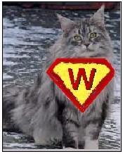 WinniCat1 - Product Image