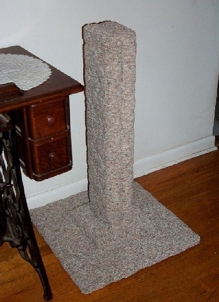 Cat Ignores Scratching Post