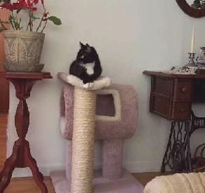 Amie, the original Feline Design Cat  perched atop the CG!