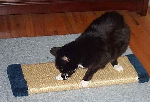 """Itty-Bitty"" works on the Mr. Big Horizontal Sisal Scratcher"