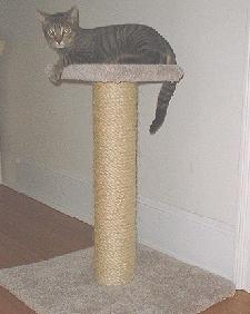 Touluse le cat!