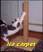 All wood & sisal. No carpet!
