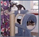 caesar & ziggy, the Hawaiian cats!