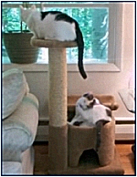 Multi purpose FUN Cat Playground!