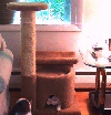The Condo Leeza FOUR! More places to romp, sleep, and perch!