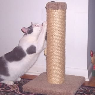 GM22 Sisal Scratching Post with furry hanging toy