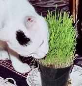 Do some kitty grass!