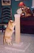 HUGEDual Sisal Pedestal