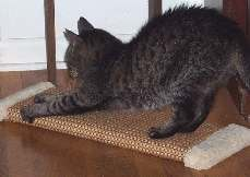 Our popular horizontal scratchers