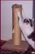 """GM22 Two Pack - Two 22""""  Sisal Rope Scratching Posts - Product Image"""