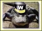 Waltercat - Product Image