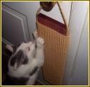 """DHW24 - 24"""" Door Hanging Scratcher - Product Image"""