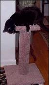 MCP - Medium Carpeted Pedestal - Product Image