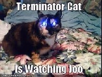 Terminator Cat - Product Image