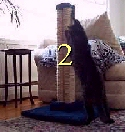 "Two (2) LSS Straight, heavy duty reinforced 30"" sisal scratching posts - Product Image"