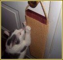 "DHW19 - 19"" Door Hanging Scratcher - Product Image"